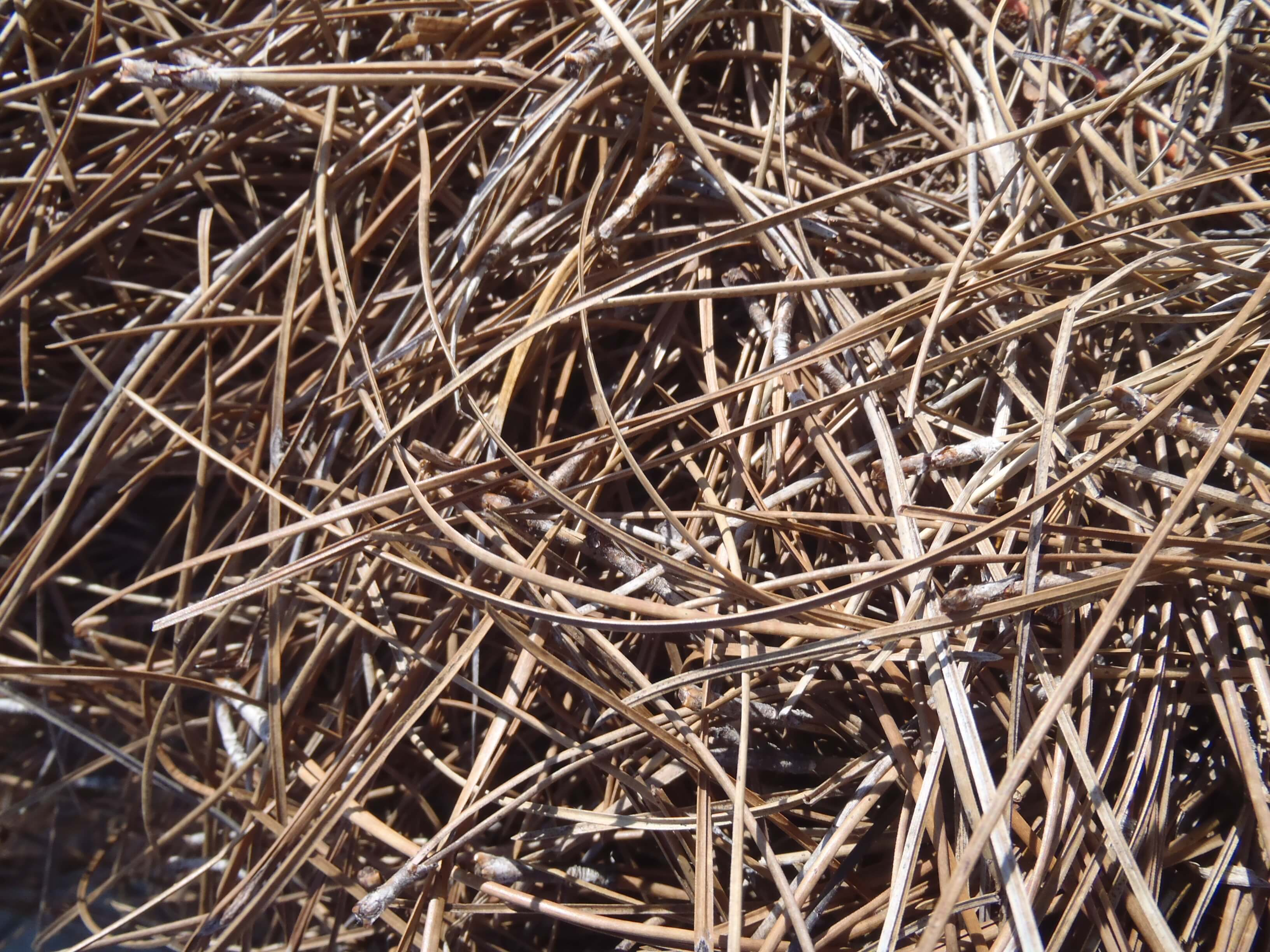 how to make pine needle mulch